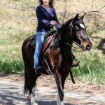 What horses can teach you about working at home by Susie Glennan www.thebusywoman.com
